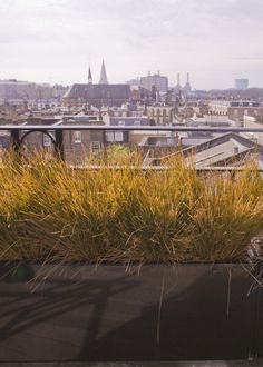 Green Patrol: Made in Chelsea For this Chelsea roof terrace we chose a sunset…