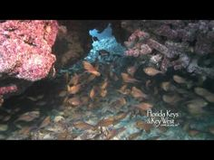 Sombrero Reef in Marathon Key in the #FloridaKeys offers an amazing place to #SCUBA dive and snorkel.