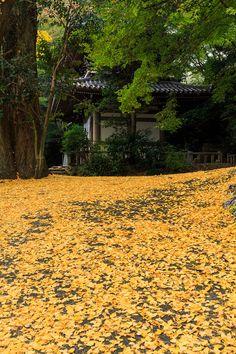 京都の紅葉2015・晩秋の山崎聖天 : 花景色-K.W.C. PhotoBlog