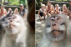 The family from the Sunshine Coast in Queensland, Australia were on a dream holiday in Bali, Indonesia when they decided to make a day trip to the popular Ubud Monkey Forest. Funny Photos, Best Funny Pictures, Cool Photos, Funniest Photos, Selfie Show, Monkey Forest, Photos Of The Week, Balinese, Holiday Photos