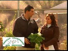 Geránios, Gitanillas, Petunias, Margaritas del Cabo, Artotis 1ª parte de 3