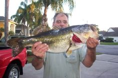 This is Paul Manobianco 14 pound largemouth Florida Bass that he caught.  He sent me this picture a few years ago.  #bass fishing
