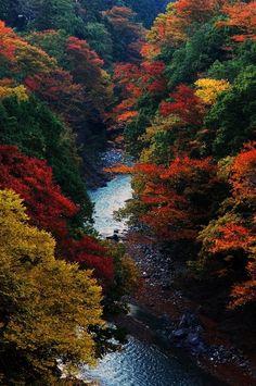 Autumn of the gorge -- by Ryuki Okuzaki
