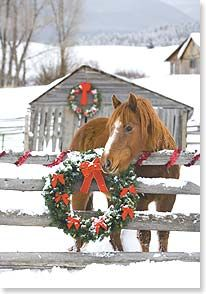 country Christmas Love this Christmas Scenes, Noel Christmas, Country Christmas, All Things Christmas, Winter Christmas, Vintage Christmas, Christmas Crafts, Christmas Horses, Christmas Animals