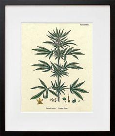 Cannabis Art Hemp Plant Wall Decor by Blivingstons on Etsy, $8.99