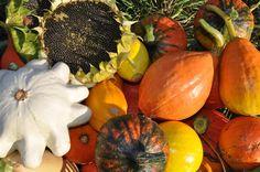 Ekozahrady, permakultura, přírodní zahrady