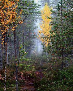 Foggy morning in forest. #lovelyfinland