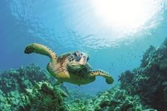 Guests at Now Jade Riviera Cancun can participate in our unforgettable sea turtle release program. It's the experience of a lifetime! Check out the blog to learn more about Rainforest Alliance Verification™ at Now Jade Riviera Cancun.