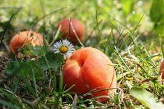 Die Obst-Alchemisten › BlogTirol Fruit, Vegetables, Harvest, Vegetable Recipes, Veggies