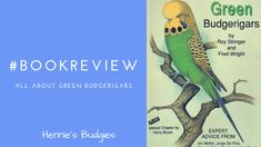 All About Green Budgerigars
