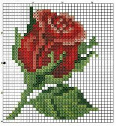 #kırmızı #gül #red #rose