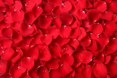 Red rose Photos Close up red rose petal background by Smith Chetanachan Red Rose Petals, Red Roses, Rose Photos, Nature Photos, Abstract, Plants, Recipes, Flowers, Summary