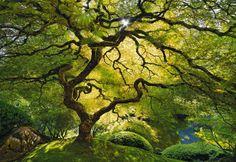 Tree in Portland Japanese Garden
