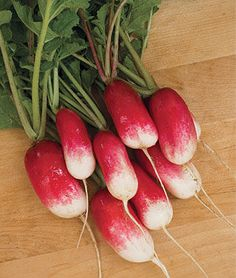 French Breakfast Radish Seeds and Plants, Vegetable Gardening at Burpee.com