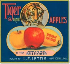 retro  I HAVE MANY APPLE AND PEAR AND ORANGE LABELS FROM THE PACIFIC NORTHWEST IN MY DINING ROOM