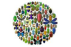 Insect Habitat Design | ... : Christopher Marley's Mesmerizing Insect Mosaics Help Preserve