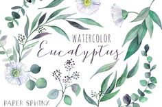 Watercolor Eucalyptus Clipart  Greenery Clipart  Flowers