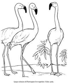 animal line drawings | Animal Drawings Coloring Pages | Flamingo bird identification drawing ...