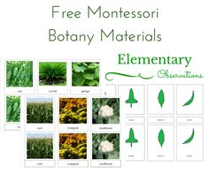 Elementary Observations: Free Botany Materials including four new printables of my own!