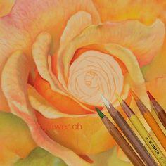 #fleur #rose #pastelsec #dessin #réaliste #art #couleur #crayonspastel #carbothello #carandache #pittpastel Crayons Pastel, Caran D'ache, Pencil, Art, Pink Blossom, Flowers, Realistic Drawings, Color, Art Background