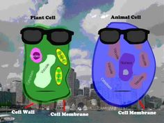 Advanced kids make their own cell rap using this video as a guideline.  Plant and Animal Cell Rap