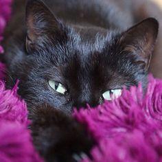 #animal #cat #beautiful #cats #instagood #catstagram #cutie #artoftheday #carpet #pink #ilovemycat #ilovemypet #instacat #instapets #kitten #kittens #kitty #life #loveit #nature #pet #pets #pic #petsagram #petstagram #picpets #sweet #photooftheday #follow4follow #tagsforlikes by ilaryshop