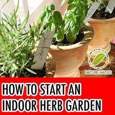How To Start an Indoor Herb Garden #herbgardenindoorwindowsill