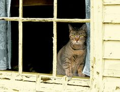 """(from """"Best Seat in the House: Cats in Their Windows"""" by Marcie Jan Bronstein)"""