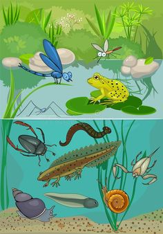 Illustration about Ecosystem of pond with inhabitants. Illustration of cartoon, amphibious, outdoor - 59091598 Pond Life, Environmentalist, Anime Artwork, Pikachu, Clip Art, Cartoon, Motion Graphics, Drawings, Drawing Ideas