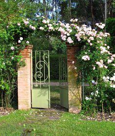 En el jardin: tres rosas trepadoras