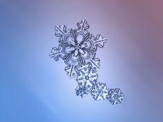 Frisch gefallene Schneeflocken in atemberaubender Nahaufnahme   The Creators Project
