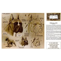 Leathercraft Library - Potrait of a Boxer by Al Stohlman (Series 4B Page 8)