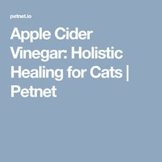 Apple Cider Vinegar: Holistic Healing for Cats   Petnet