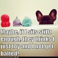 Where is That Dog?  I Have His Four Favorite Bath Toys Out Ready to Go!