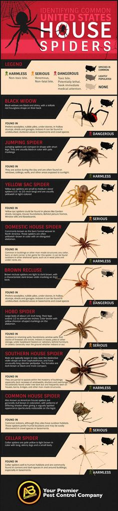 How To Identify Common Poisonous Spiders In Your Home Common House Spiders, Brown Recluse Spider, Wicked, Jumping Spider, Garden Guide, Dark Places, Pest Control, Fleas, Wednesday
