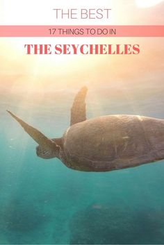 The best 17 things to do in the Seychelles - Seychelles is one of the most acclaimed world destinations which has gotten a lot of attention in the last years, ever since Prince Williams and his wife, Kate Middleton, visited the archipelago for their honeymoon. Tropical white beaches, lush...
