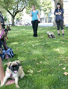 105 Best Pet Care Images Pet Care Adoption Foster Care Adoption