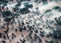 The Rapid Decline Of The Natural World Is A Crisis Even Bigger Than Climate Change Species Extinction, Cattle Farming, Environmental Health, Going Natural, Natural World, Climate Change, Mammals, Nurses, Plants