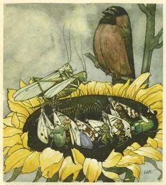 'Der Heuschreck und die Blumen / The grasshopper and the flowers' by Max Dingler, illustrated by Else Wenz-Vietor. Published 1924 by Nürnberger Bilderbücher Verlag.