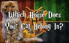 Time to break out the old Sorting Hat and figure out exactly what kind of cats we have.