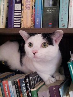 Cats and Books - what more could you ask for?