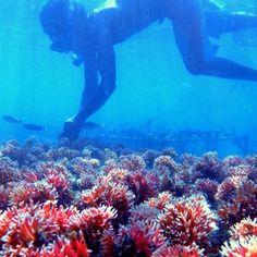 Protection de l'environnement - Coral Guardian