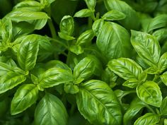 How to grow herbs to the peak of flavor