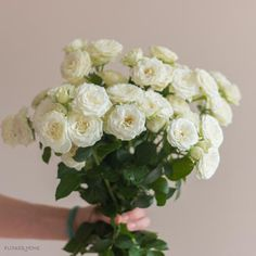 White and Cream Spray Roses Mix & match our spray roses with other flowers by the bunch to achieve the look you want or let us put together a custom flower package for you! Bulk Wedding Flowers, Diy Wedding Bouquet, White Spray Roses, Cream Roses, White Flowers, Standard Roses, Diy Boutonniere, Traditional Roses, Flower Packaging