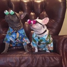 """Do you see it yet"".... ""nothin"", funny French Bulldogs, gif, click to watch, too funny ; }"