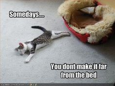 ALMOST THERE                I GOT THE CAT NIP WE ARE ALL GOOD