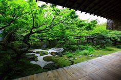 永観堂 方丈庭園 京都のもみじの名所の絶品の緑