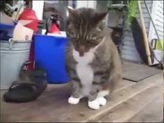 Cats Puking to Techno Music