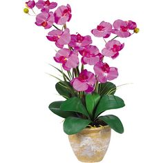 Faux Phalaenopsis Orchid  at Joss and Main