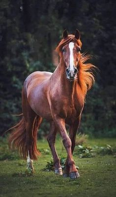 Sun struck: Handsome chestnut horse glowing fiery red where illuminated by the sun. Cute Horses, Pretty Horses, Horse Love, Beautiful Horse Pictures, Most Beautiful Horses, Beautiful Creatures, Animals Beautiful, Cute Animals, Wild Animals